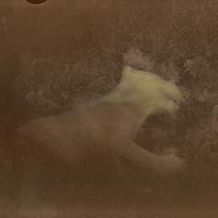 Pes-v-trávě-67x48-cm-koláž-2012