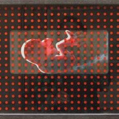 Embryo-assemblage-52-x-38-cm-2005