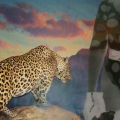 Leopard-with-a-Swimmer-collage-60-x-46-cm-2005
